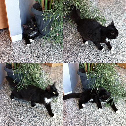 entlaufene katzen köln